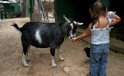http://www.dreamstime.com/royalty-free-stock-photo-petting-zoo-image1008725