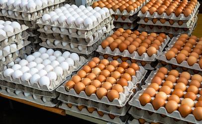 eggsinbulk_406x250