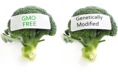 GMO vs non-genetically modified broccoli