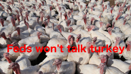 Salmonella contamination in turkey is widespread and unidentified