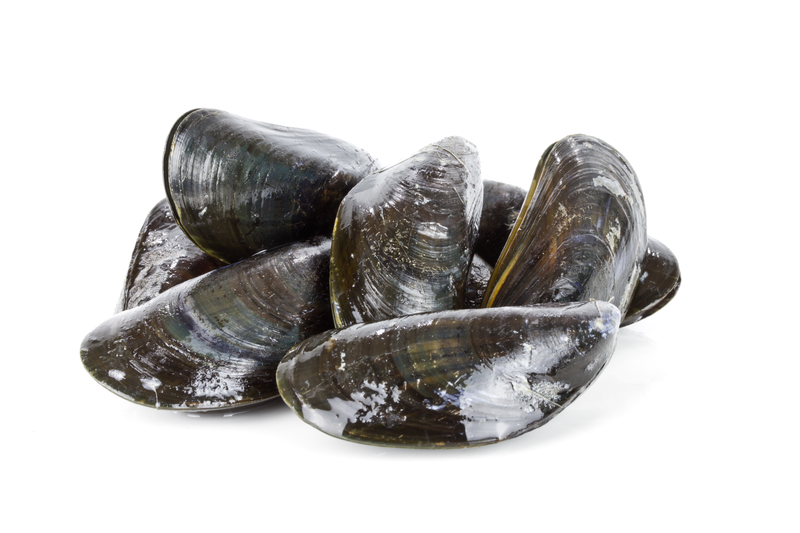 dreamstime_mussels bivalve molluscs seafood shellfish