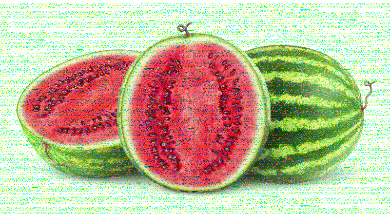 Isolated watermelons
