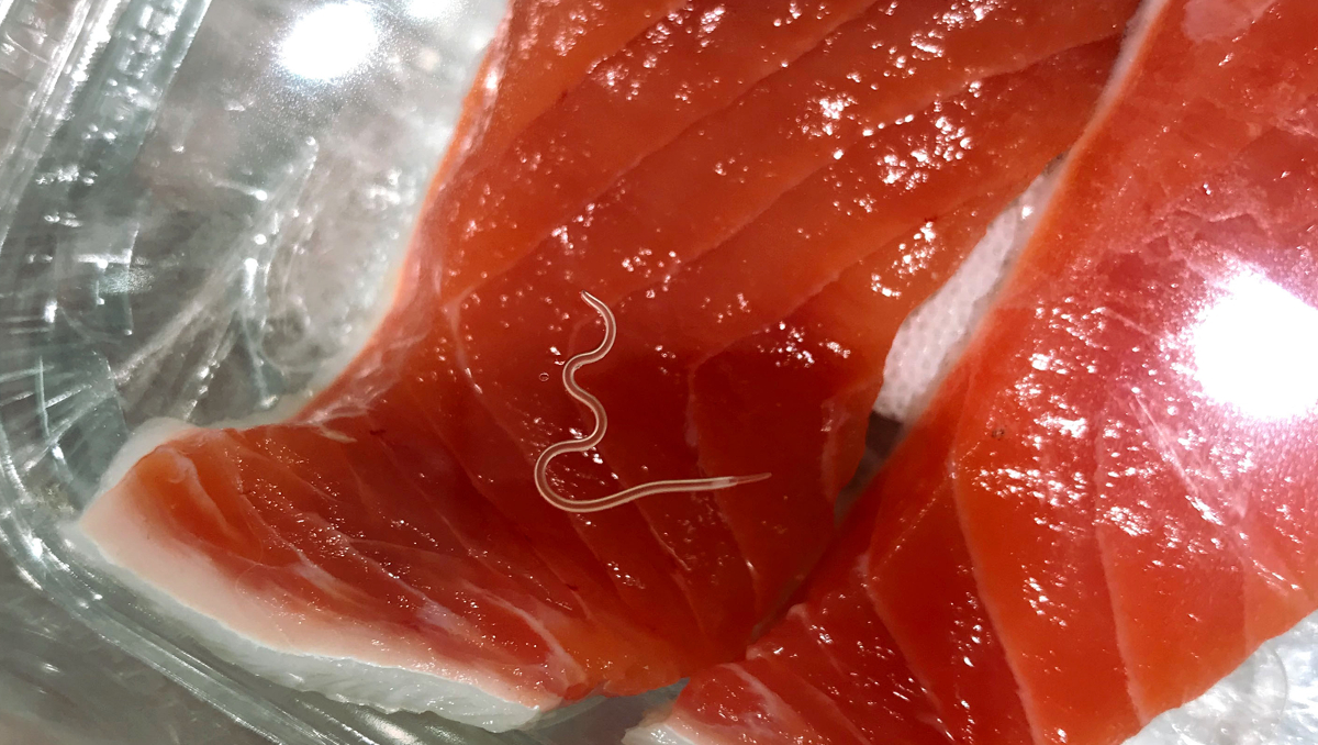 Anisakis worm in raw salmon