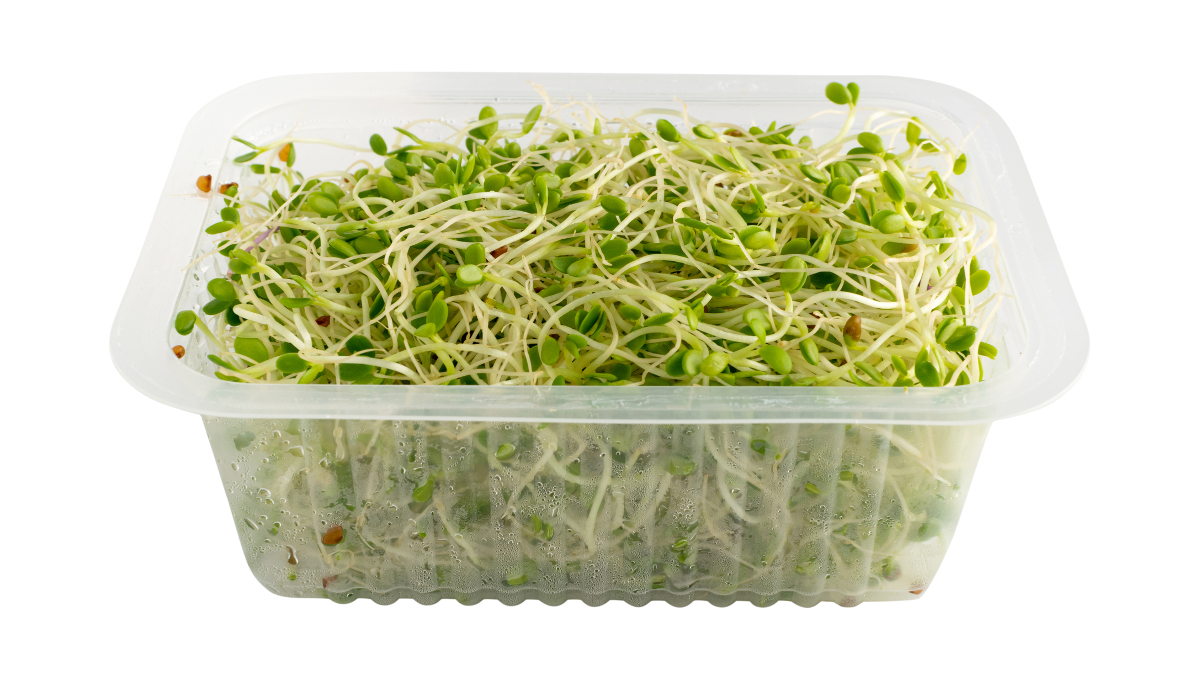 red clover sprouts clam shell