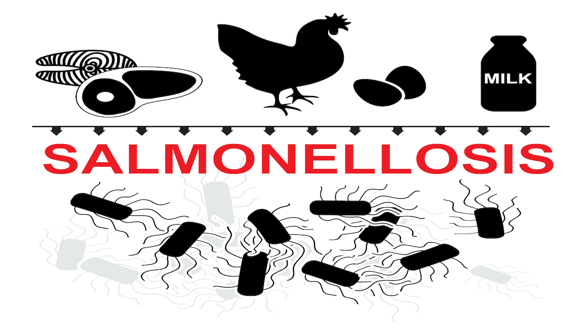 Study finds Salmonella program was cost effective in Hungary thumbnail