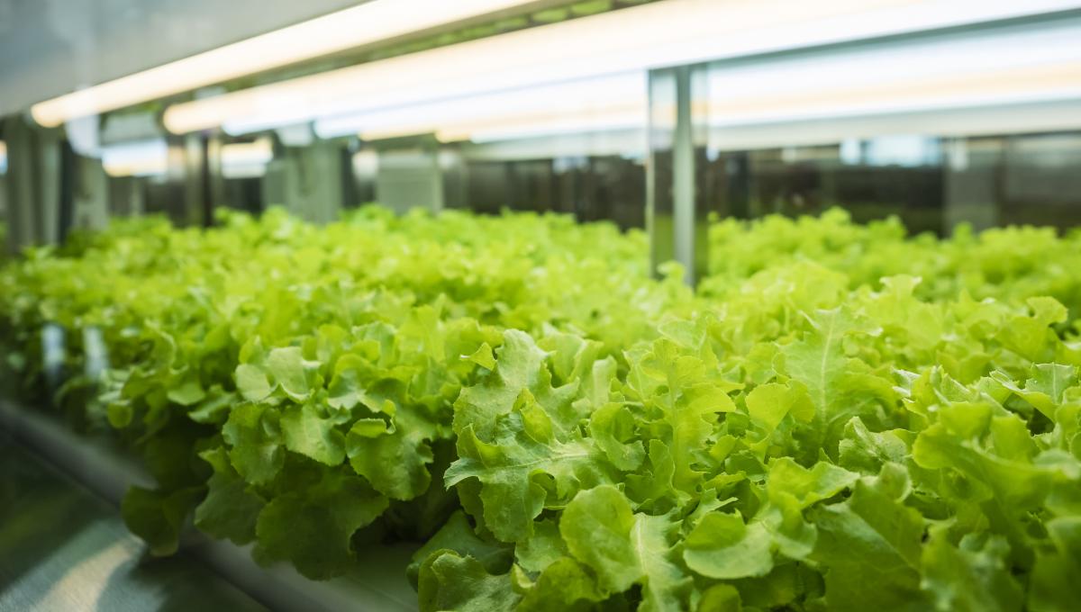Indoor grown produce