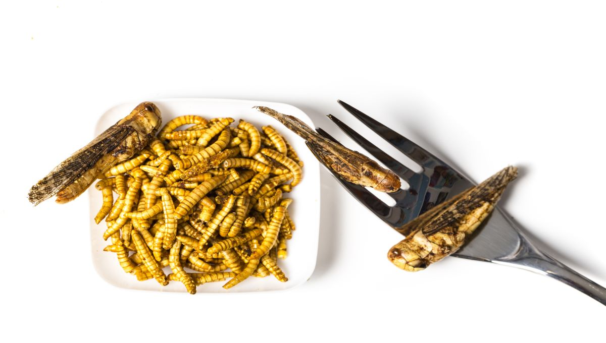 dreamstime_edible insects consumption
